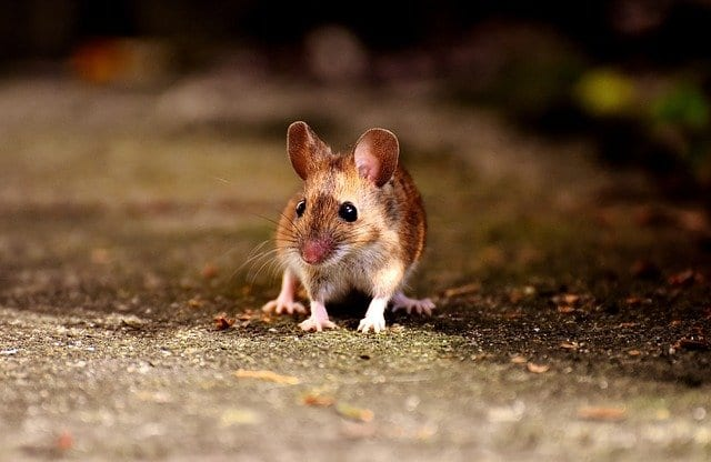Mouse in Car - auto repair service in Bedford, PA